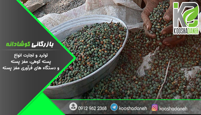 مقایسه پسته افغانی با پسته ایرانی